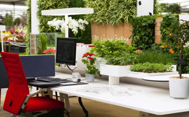 plante-bureau
