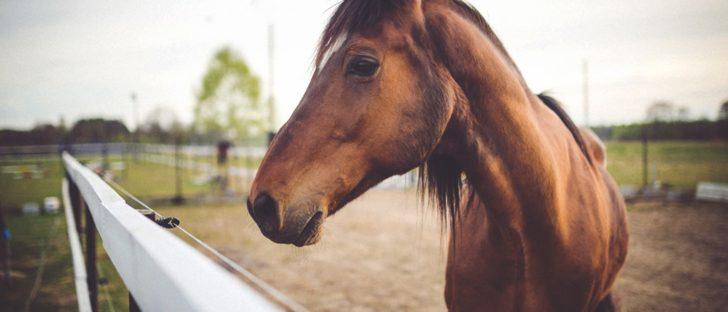 construction-refuge-cheval